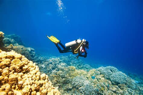 scuba dive trips scuba diving florida excursions