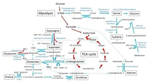 carbohydrates quora what is the relationship between carbohydrates lipids