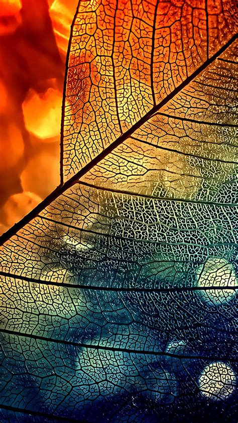 bokeh abstract transparent leaf blue orange android
