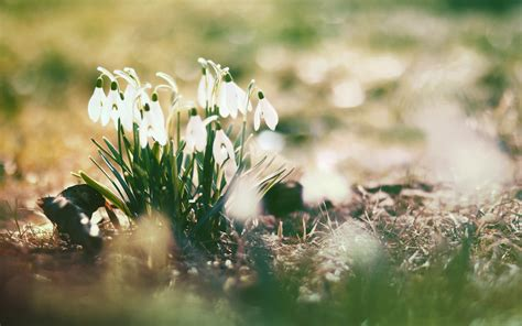 wallpaper tumblr spring flower tumblr wallpaper 1366x768 42450