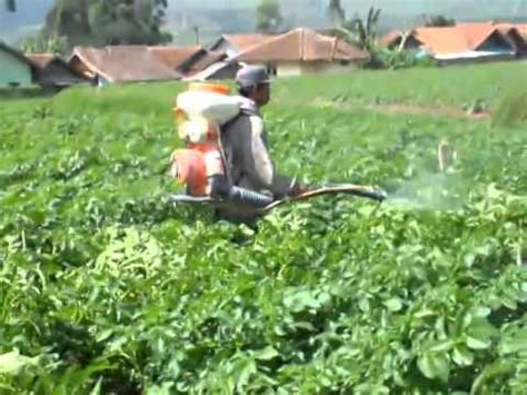 Furadan Bawang Merah clip hay penggunaan pestisida bbzbr9penb0 xem