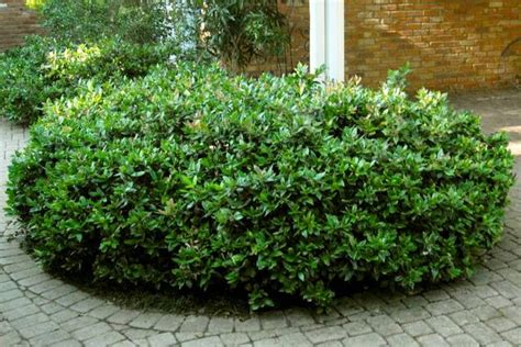lights for small bushes bushes for shade garden design ideas