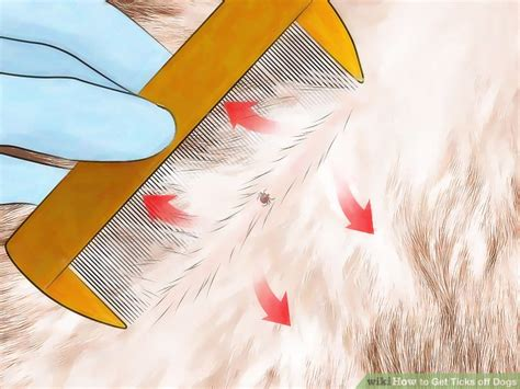 how to kill ticks on dogs how to get ticks dogs with pictures wikihow