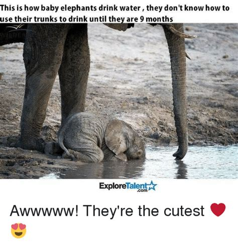 Baby Elephant Meme - elephant meme www imgkid com the image kid has it