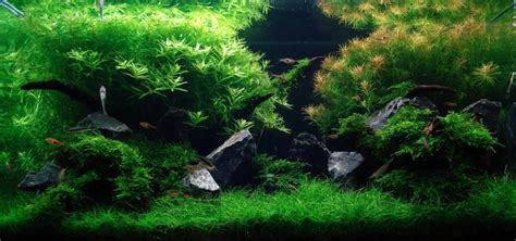 aquascape substrate aquascape design
