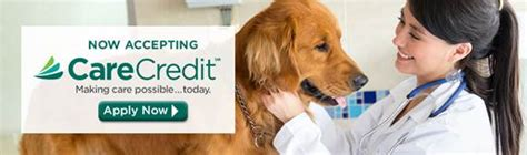 care credit for dogs palm harbor vet clinic dr joel murphy animal and bird center of palm