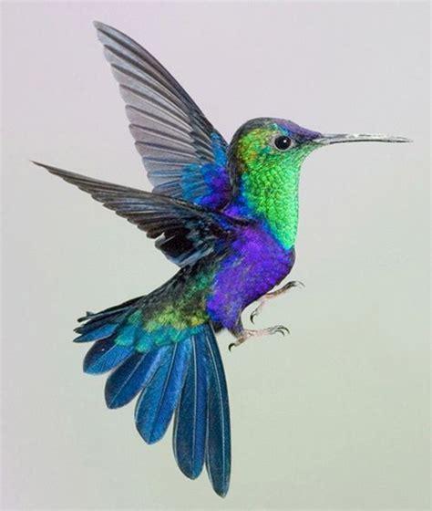 colorful hummingbirds pin by caspian on birds birds hummingbird