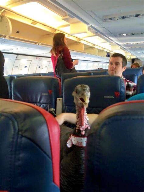 airline stewardess flashing 20 of the most annoying plane passengers ever bored panda