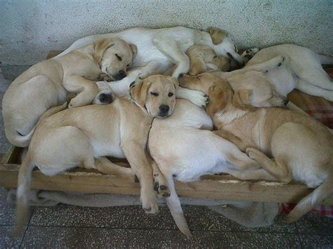 pile of puppies pile animal friends