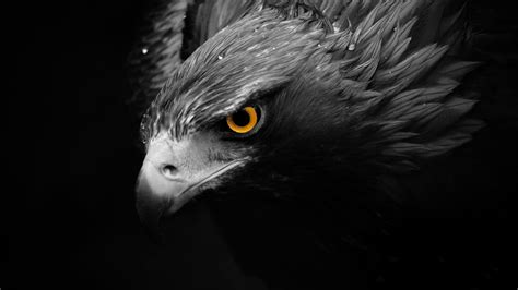 Humm3r Eagle Black With Real Pic adler hd wallpaper and hintergrund 1920x1080 id 555367