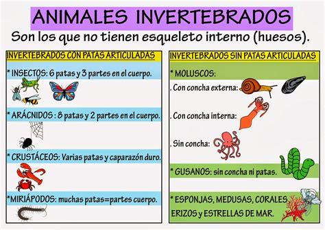 los animales vertebrados cuadros sin 243 pticos sobre animales vertebrados e