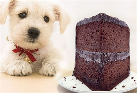 is bad for dogs why chocolate is bad for dogs