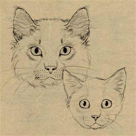 how to doodle animals how to draw animals cats and their anatomy