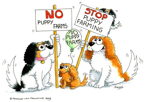 puppy farms battery farmed puppies cavalier matters