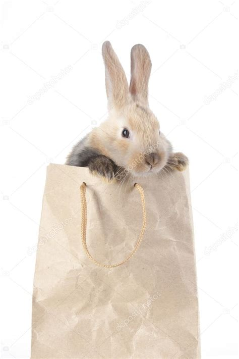 Rrrribbit In My Bag by Rabbit In A Paper Bag Stock Photo 169 Watman 70255445