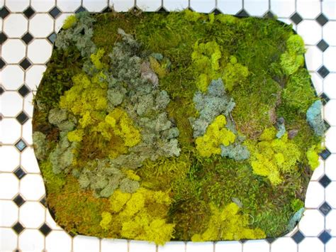 make a moss bath mat hgtv