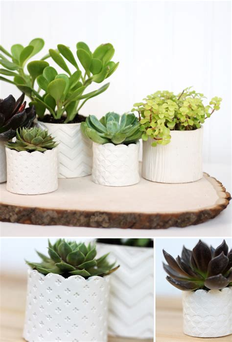 cute succulents diy sted clay succulent pots better housekeeper