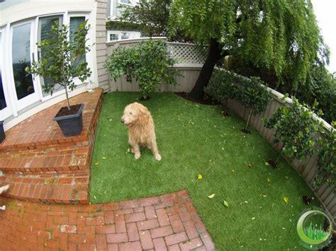 imagenes de jardines con animales etolog 237 a familiar un perro no es una flor