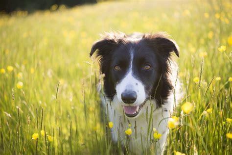 top dog breeds the top 10 smartest dog breeds