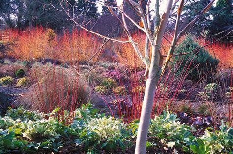 The Winter Garden by Garden Design In Winter Bluestones Garden Design