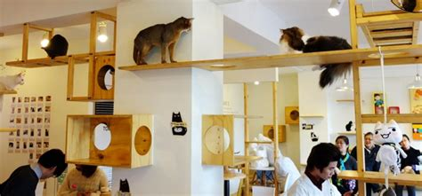Denver is getting a cat cafe, because Denver is a magical