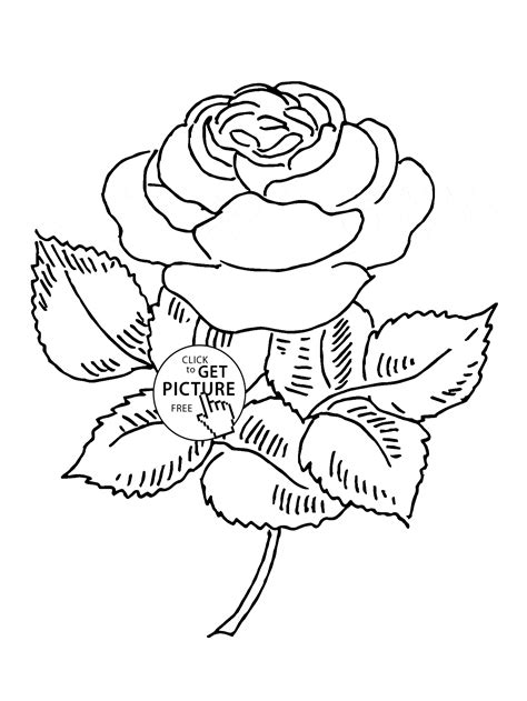 coloring pages of real roses blooming rose coloring page for kids flower coloring