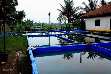 Harga Kolam Terpal Gurame cara mudah budidaya ikan gurame dalam kolam terpal