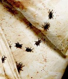 how to kill bed bugs review of 5 the most effective means