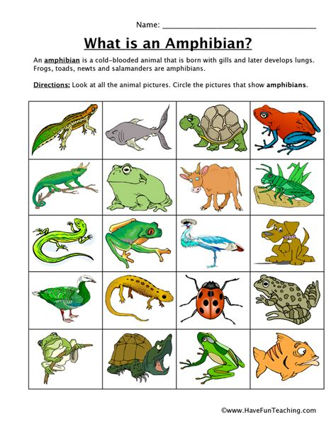 Animal Classification Worksheet by Hibian Classification Worksheet Teaching