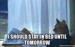 Sophisticated Cat Meme Generator - i should stay in bed until tomorrow make a meme