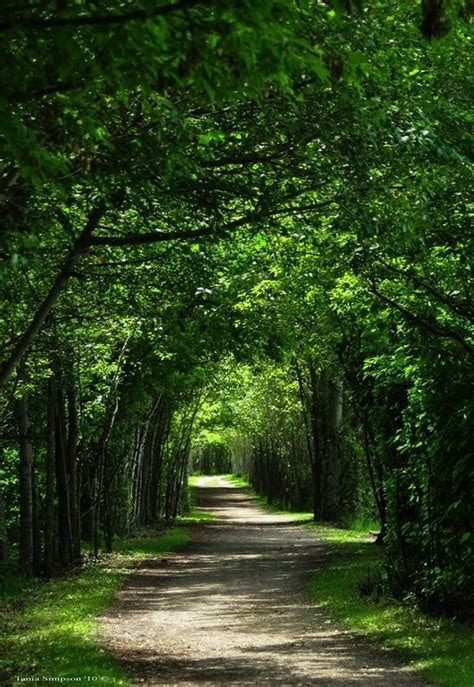 awesome pathway trees trees trees pinterest