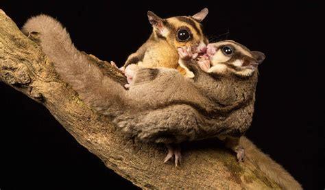 scoiattolo volante un bacio una coccola e poi via a cercar cibo comincia la