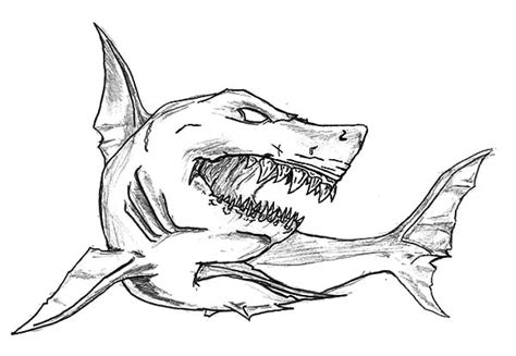 shark jaw sketch www pixshark com images galleries