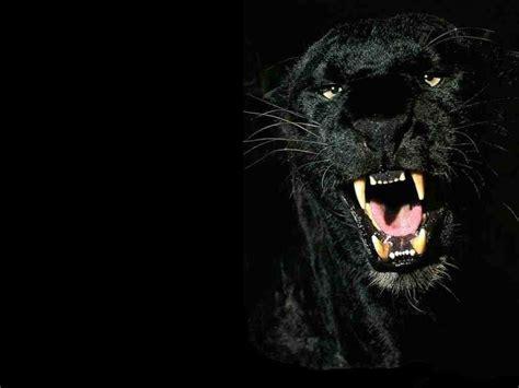 Is A Real Beast by Marotochi Sfondi