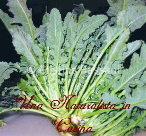 cucinare broccolo fiolaro una naturalista in cucina il broccolo fiolaro di creazzo