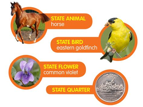 related keywords suggestions for iowa state flower nj state flower related keywords suggestions nj state