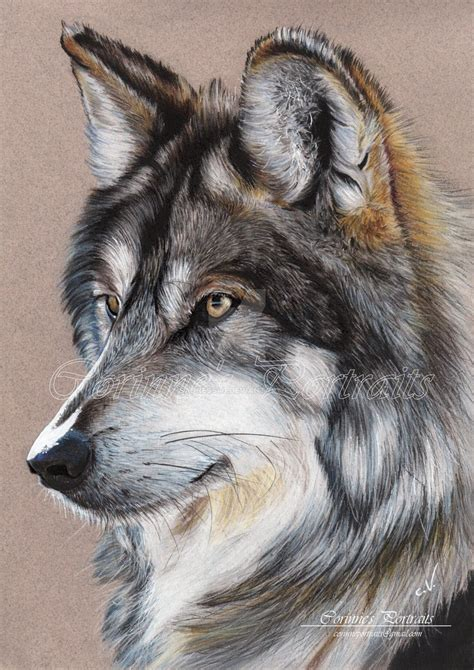 wolves drawings grey wolf by sadness40 on deviantart