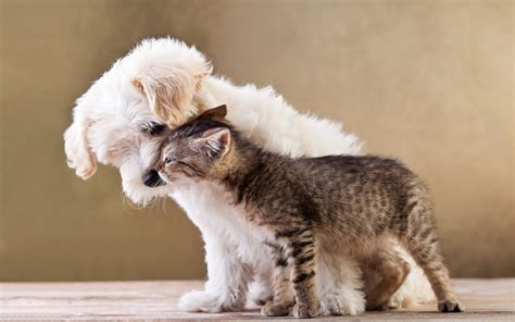 cat and cuddling hd animals wallpapers
