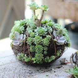 Diy Backyard Greenhouse 70 Indoor And Outdoor Succulent Garden Ideas Shelterness