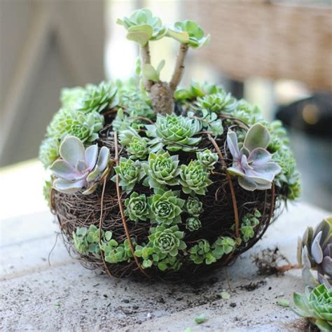 Ideas For Indoor Succulents Design Picture Of You Can Make Really Creative Gardens That Are Shaped Like Pumpkins