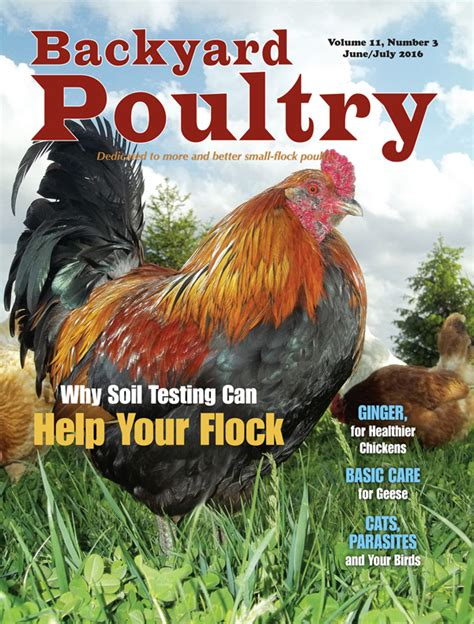 backyard chicken magazine byp june july 2016 flip book countryside network