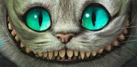 imagenes uñas gatos el espejo g 243 tico la filosof 237 a de quot alicia en el pa 237 s de