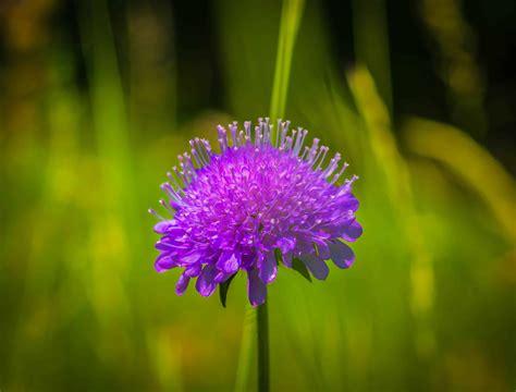 picture flora garden wildflower grass nature
