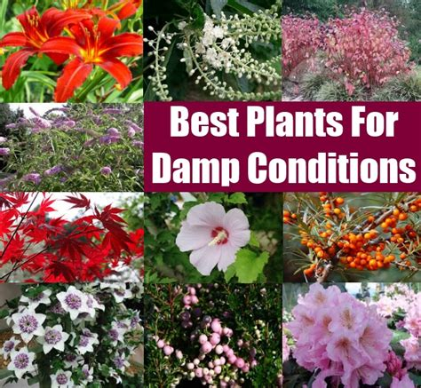 plants for conditions backyard drainage ideas 2017 2018 best cars reviews