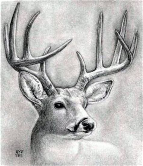How to Draw a Deer Head, Buck, Dear Head, Step by Step ... Whitetail Buck Drawings