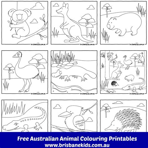 Australian Animals Colouring Pages Brisbane Kids Aboriginal Animal Colouring Pages