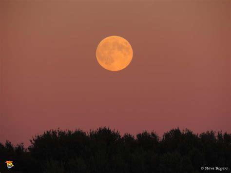 harvest moon harvest moon