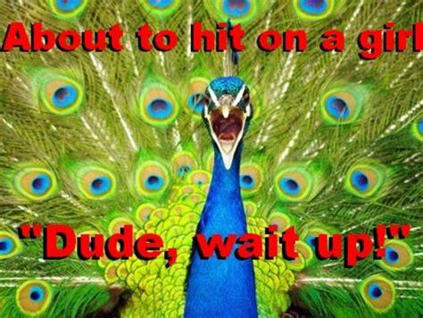 Peacock Meme - cockblock peacock know your meme