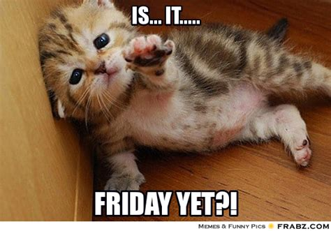 Is It Friday Yet Meme - its friday funny animals memes