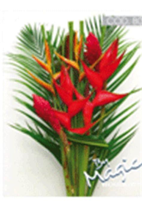 tropical plants wholesale tropical bouquet upright 06